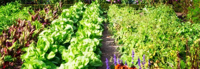 rows of a beautiful vegetable garden