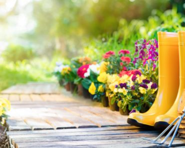 bright yellow rain boots and garden accessories in a path in a stunning garden