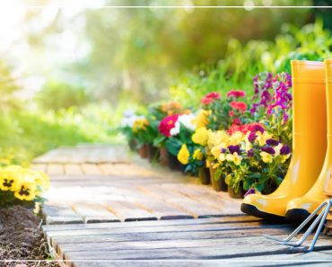 Beautiful wooden path with colorful blooming flowers and garden tools and bright yellow boots