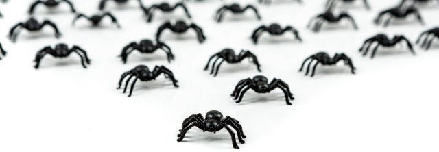 fake spiders lined up to take over